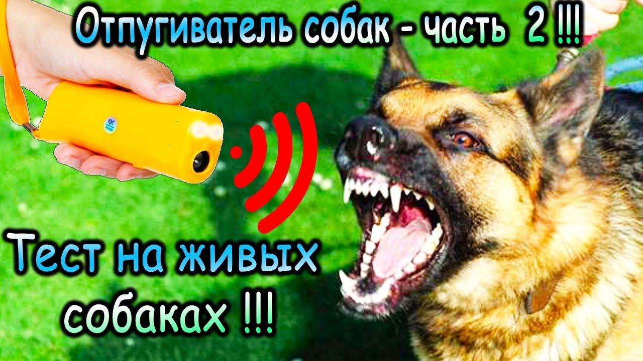 Ультразвуковой отпугиватель собак с AliExpress - часть 2 реальный тест на живых собаках !!!