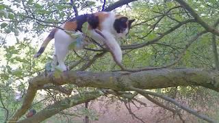 Katzdendame Lucy auf Klettertour zum Tag der Katze, World Cat Day