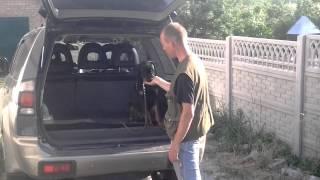 Воспитание щенка ротвейлера  Посадка в автомобиль
