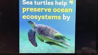 Tuana Yazici-Turtle Habitation Club-Shares AJ+