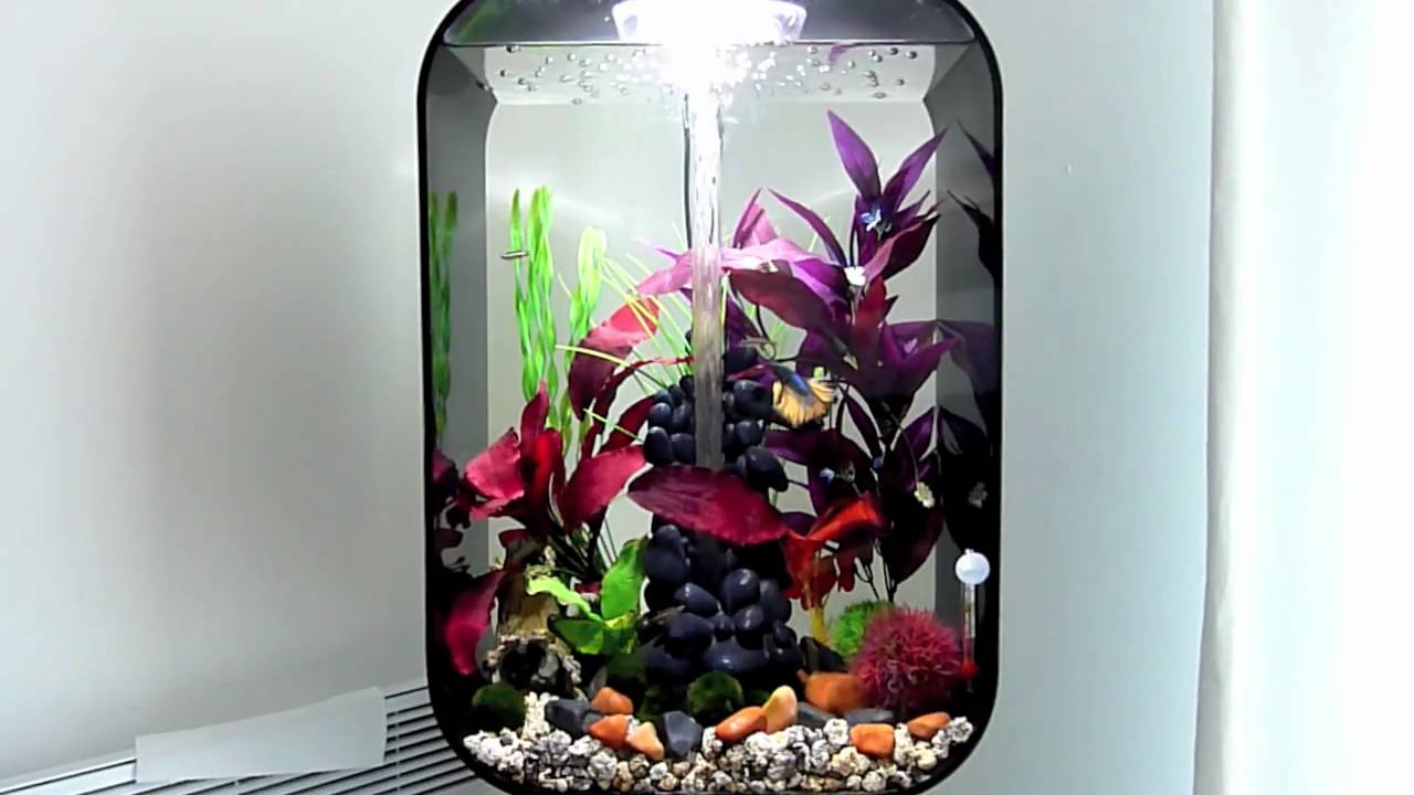 60l Biorb Life With Halfmoon Betta And Wccm S Youtube