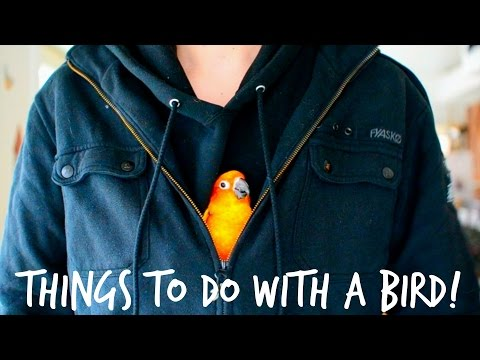 Things you can do with a bird!!!