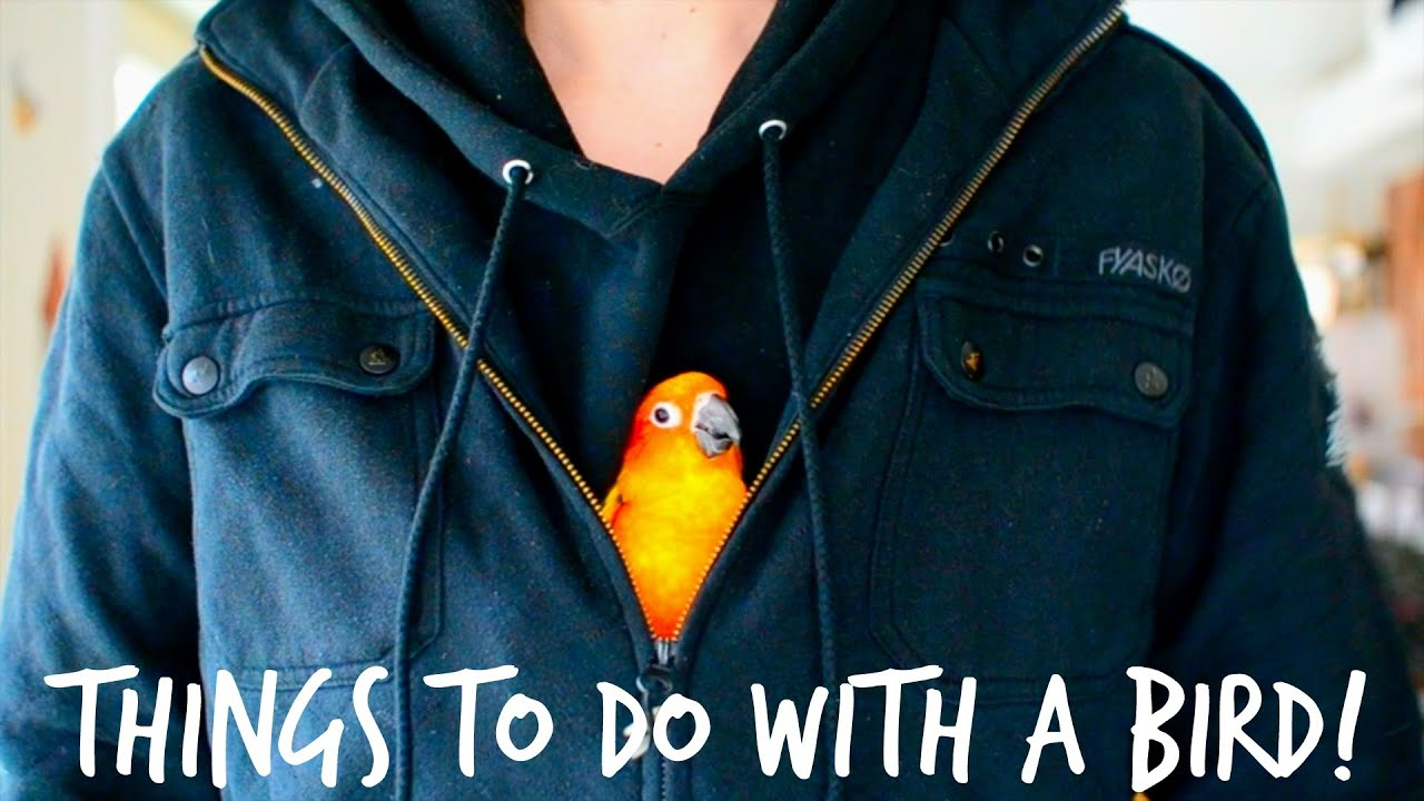 things you can do with a bird youtube