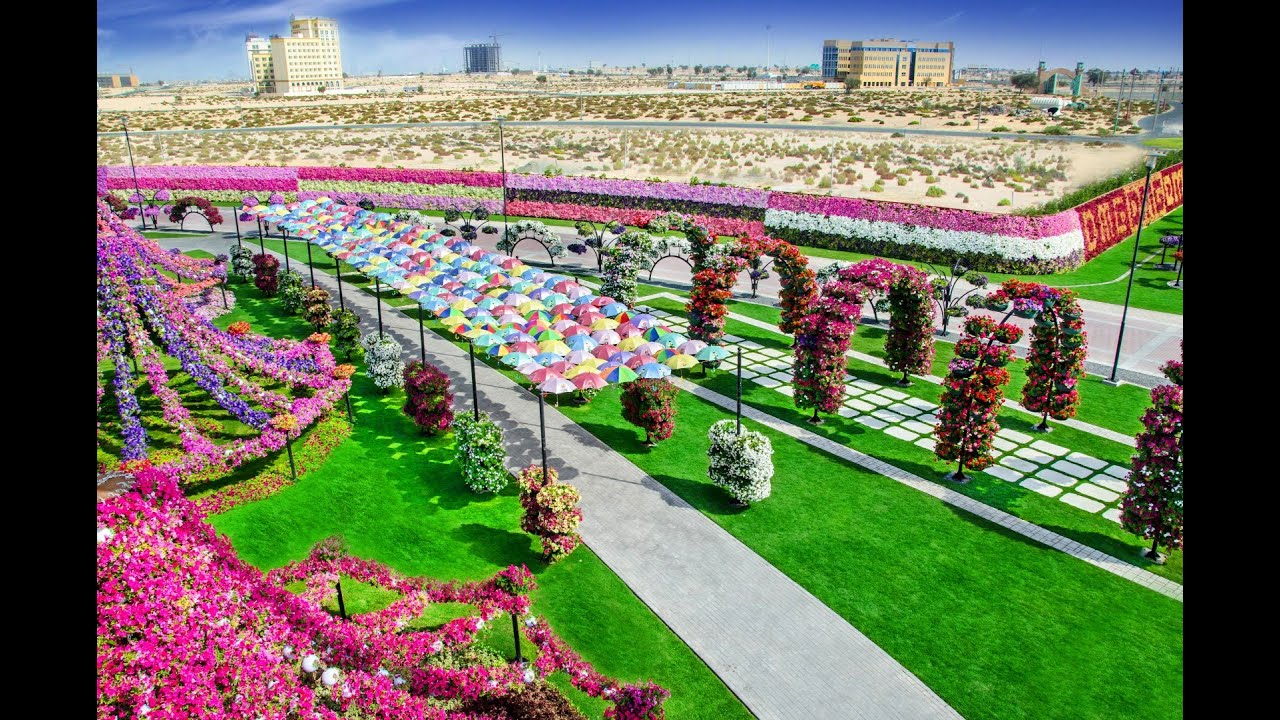 miracle garden in dubai is home to 45 million flowers miracle