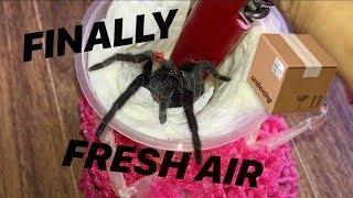 Tarantula Unboxing ~ AFTER 1 WHOLE DAY !!!