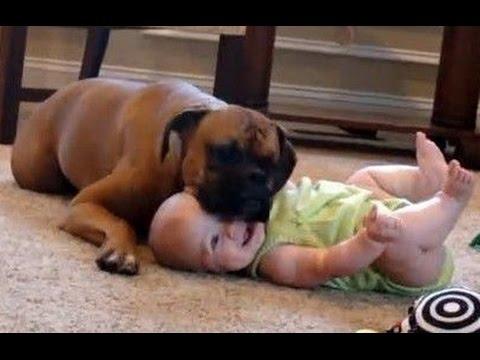 Bébés drôles rire hystérique à chiens et chats Compilation 2015 [HD VIDEO]  , YouTube