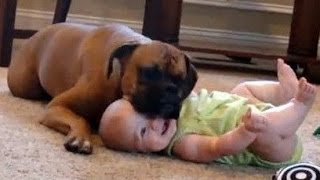 Bébés drôles rire hystérique à chiens et chats Compilation 2015 [HD VIDEO]
