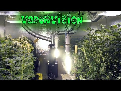 Weed Warehouse Veg Room Prep!