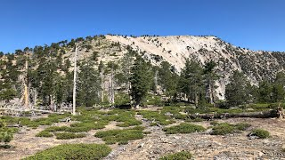 Download Mount Baden-Powell from Vincent Gap