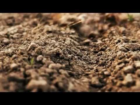 World Bank: No-Till Agriculture Prevents Soil Erosion