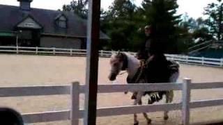 KHP Kentucky Horse Park - Parade of Breeds - Arabian