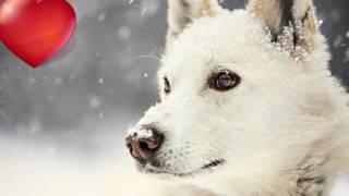 Правила для начинающих владельцев собак