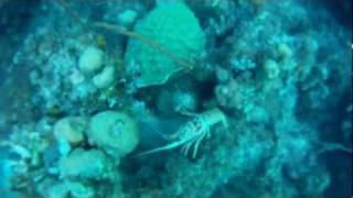 Spearfishing Nassau, Bahamas Lobster, Snapper & Grouper-10.wmv