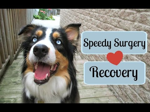 Tips For A Speedy Recovery From Surgery (Dog/Cat)  Life With Aspen 