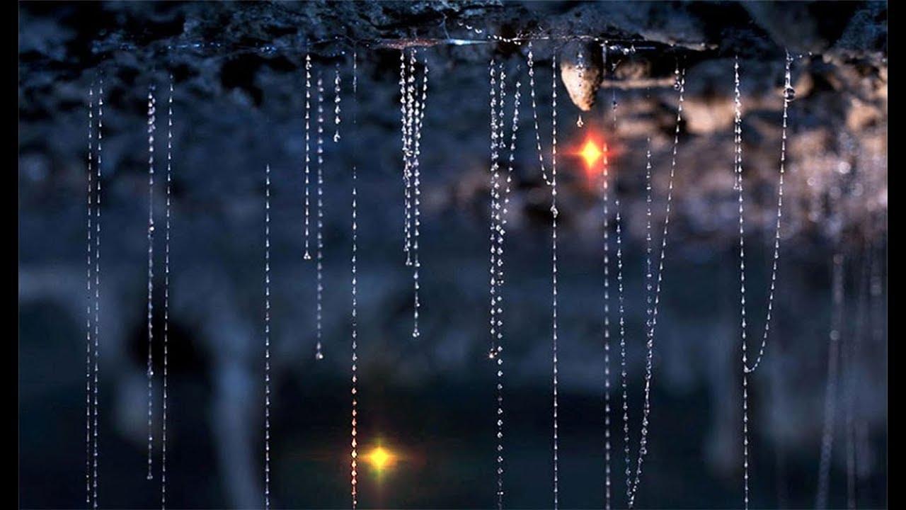 Image result for waitomo glowworm caves habitat