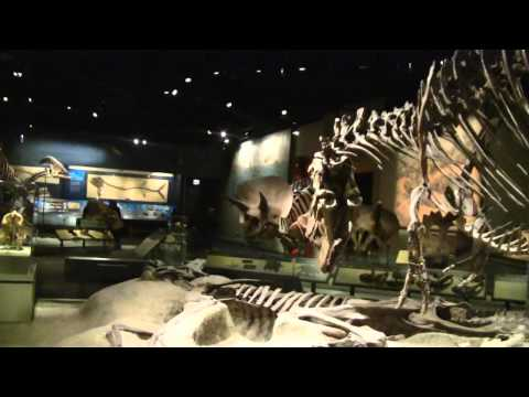 Dinosaur Exhibit Field Museum