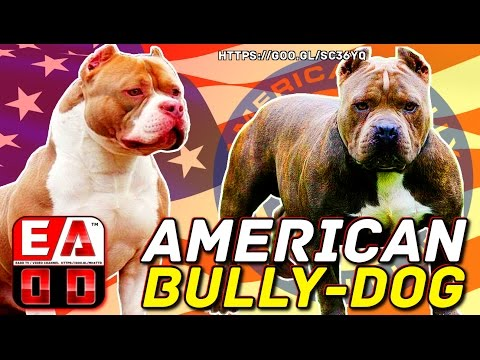 AMERICAN BULLY - Standard ABKC - History, general appearance, care and health