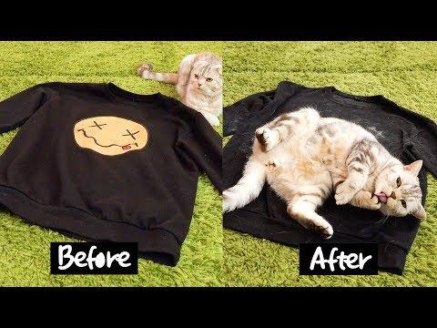 집사 옷을 바닥에 두면 고양이들 반응은?