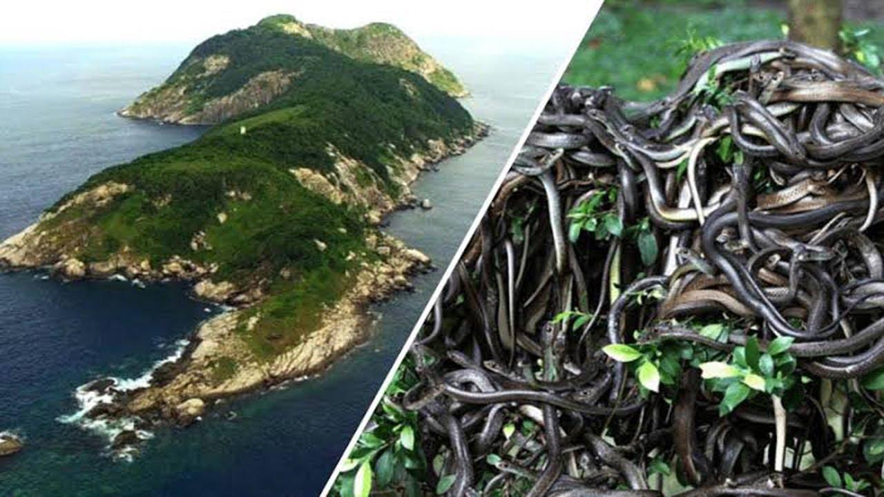 جزيرة الثعابين الجزيرة الأخطر فى العالم Youtube