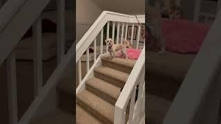 Mom & her circus dog
