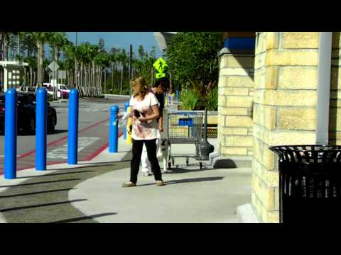 Deaf Dog Training Off Leash Dogtra Pager E Collar Delbert Dalamation Mix