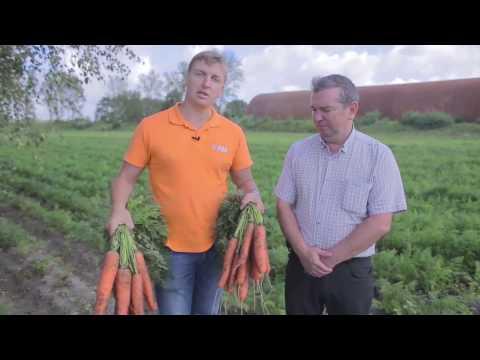 Голландские семена моркови Bejo Zaden B.V. (Бейо Заден)