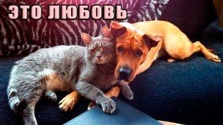 Настоящая любовь кота к собаке