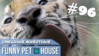 СМЕШНЫЕ ЖИВОТНЫЕ И ПИТОМЦЫ #96 АВГУСТ 2019   Funny Pet House