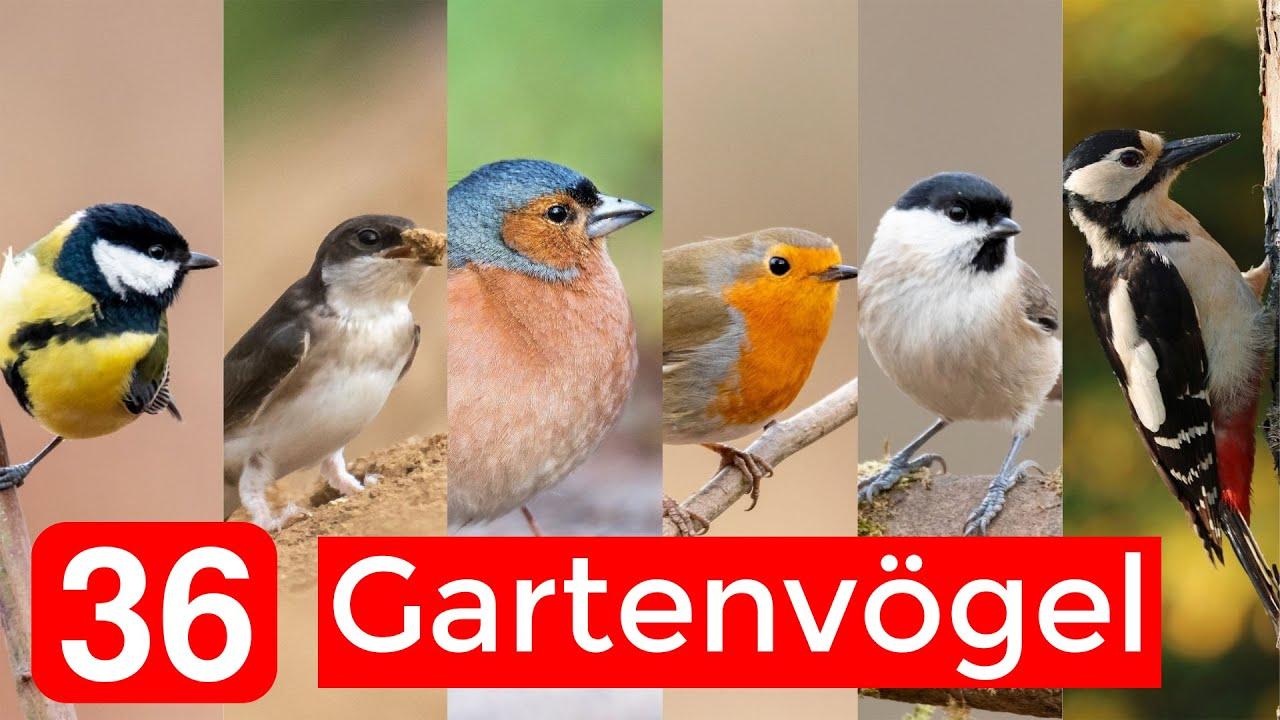 36 Haufige Gartenvogel Bestimmen Aussehen Gesange Besonderheiten Youtube