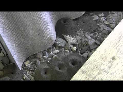 Соседи по даче - земляные пчелы