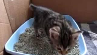 20120224 Mozes kitten going potty