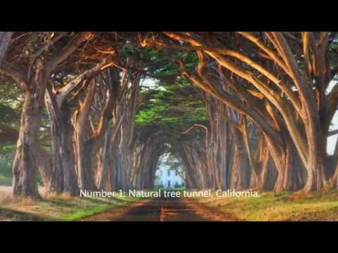 11 Real Awesome Trees