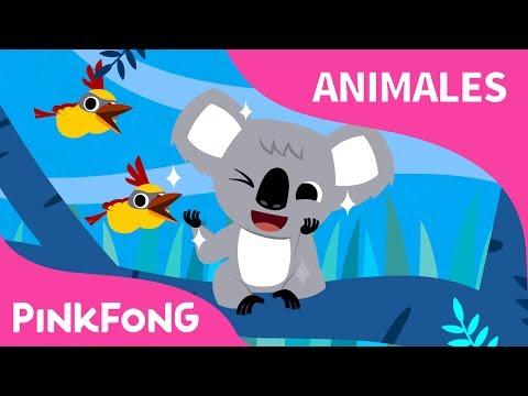 Koala Lalala | Koala | Animales | PINKFONG Canciones Infantiles