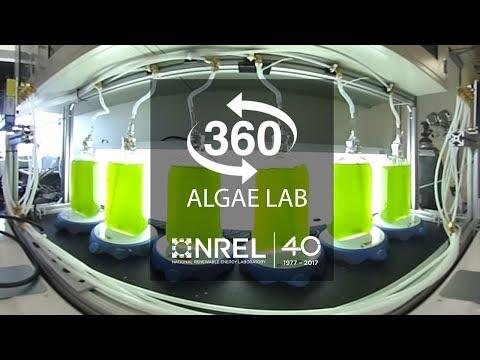 360° Algae Lab Tour at NREL - Narrated