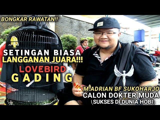 FAI DUNIA KICAU :  Bongkar Rawatan!! SETIGAN BIASA LANGANAN JUARA