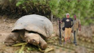 BIGGEST TORTOISE IN THE WORLD