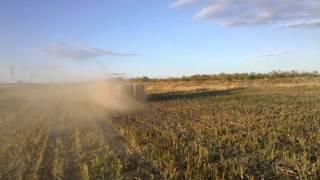 Baling dryland sorghum