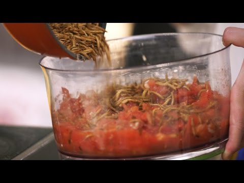 Grow Your Own Edible Mealworms in Your Kitchen