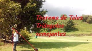 Teorema de Tales - Cómo calcular la altura de un árbol (Grabado desde Cholula)