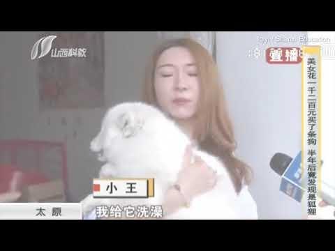 Compra un cachorro de raza y varios meses después descubre que es un zorro