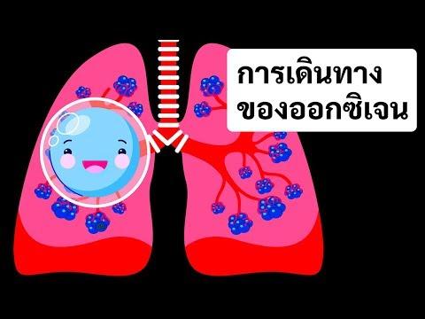 การเดินทางของออกซิเจนในร่างกายของคุณ