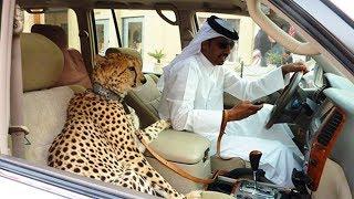 [TOP 10] SZOKATLAN DOLOG ✔ Ami CSAK DUBAI-ban LÉTEZIK! [LEGJOBB]