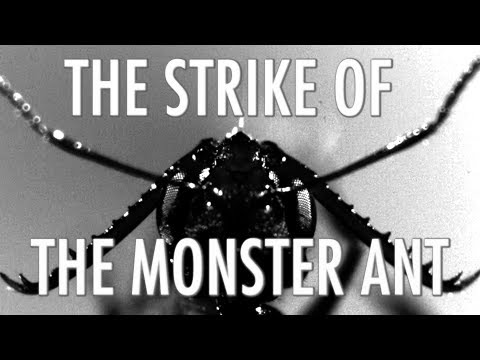 The Strike of the Monster Ant