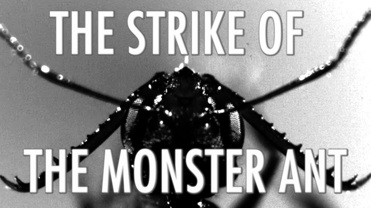 The Strike of the Monster Ant - North Carolina Museum of Natural Sciences 2017-09-03 16:55