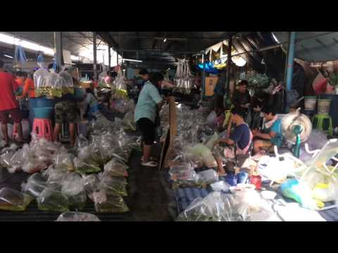 Chatuchak Fish Weekend Market in Bangkok, Thailand Part 2