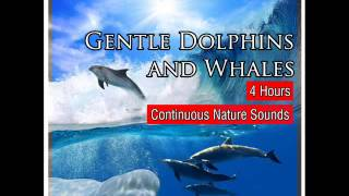 Sounds of the Sea with Gentle Dolphins and Whales
