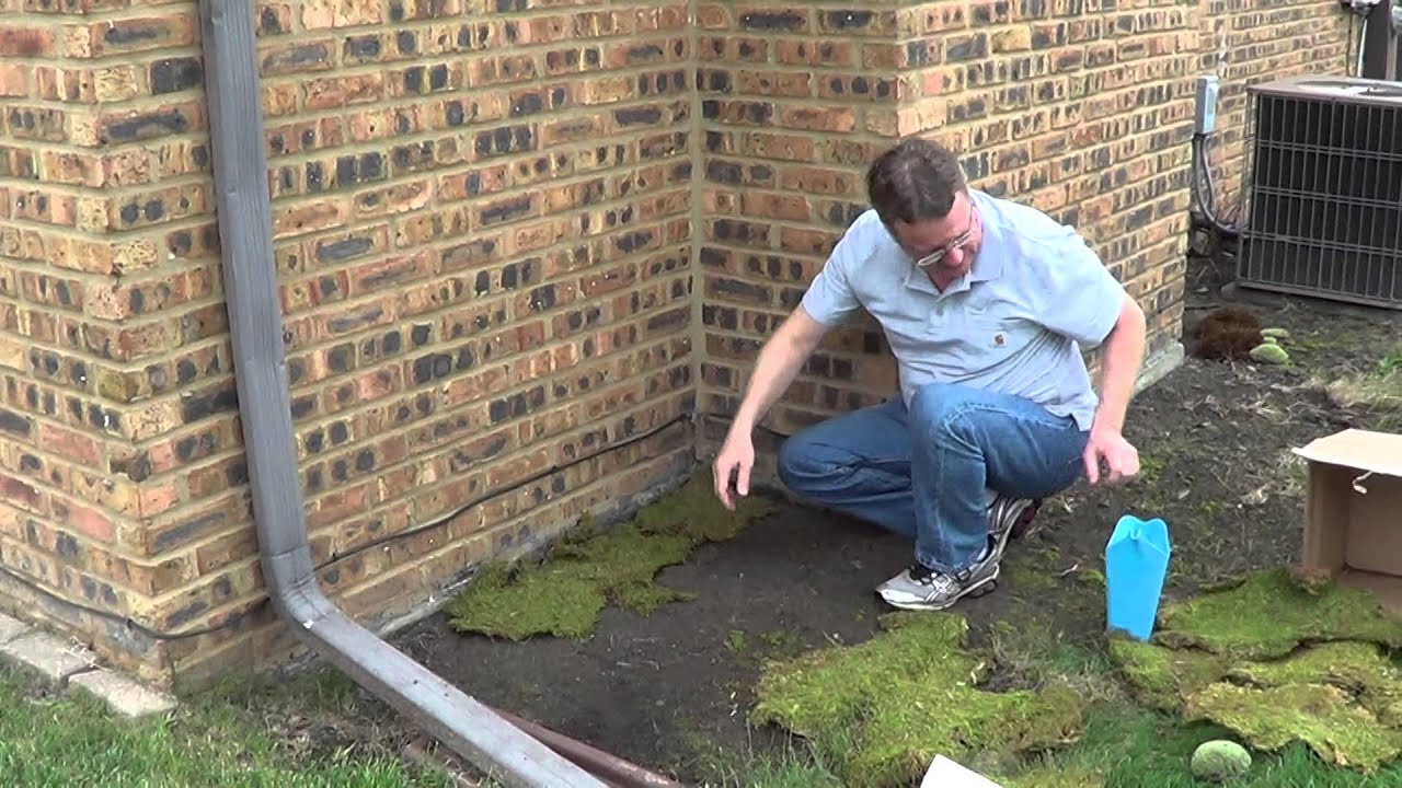Moss Landscaping Landscaping In Shady Areas Youtube