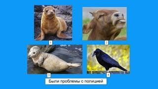 Познавательная детская викторина про животных - Почемучка - С добрым утром, малыши!