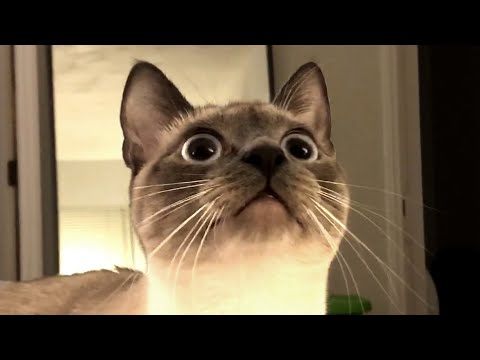 The Best Cute and Funny Cat Videos This Week!
