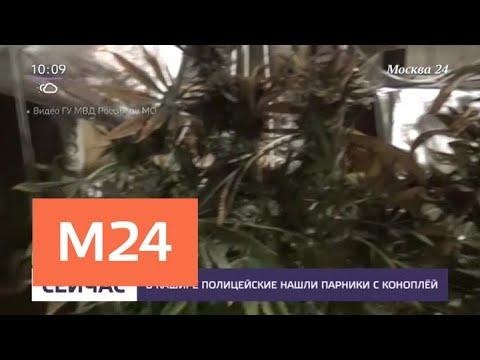 В Кашире полицейские нашли парники с коноплей - Москва 24